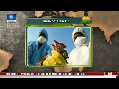 Network Africa: Uganda Govt Confirms Bird Flu Strain In Lake Victoria