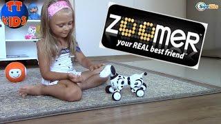 Интерактивная игрушка - Собака Зумер. Ярослава играет с роботом собакой Zoomer