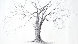Cómo dibujar un árbol con bolígrafo (Un árbol grande y bello) - Narrado