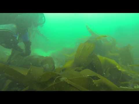 Pembrokeshire Diving, St Brides Haven 28/06/14