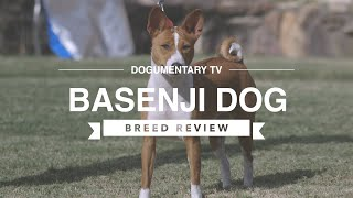 BASENJI BREED REVIEW