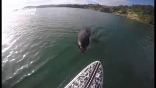 Increible, este hombre se topa con esta Orca y ve su reacción.
