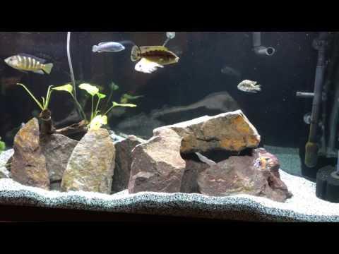 High Nitrates/sick Fish