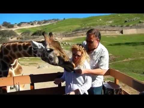 Michael & Terri Feeding a Giraffe