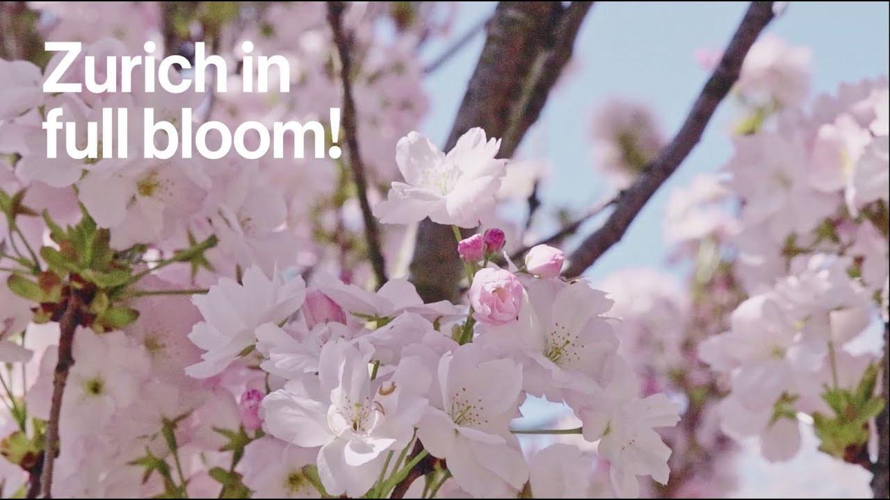 Zurich in full bloom
