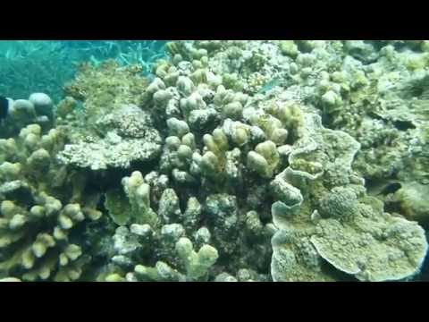 Snorkelling in the UNESCO reef New Caledonia