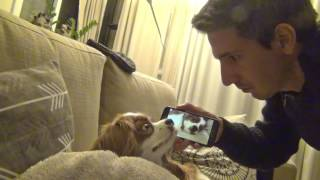 видео Егор Крид - Мне нравится | СОБАКА ДЖИНА ПОЁТ | Elli Di Собаки