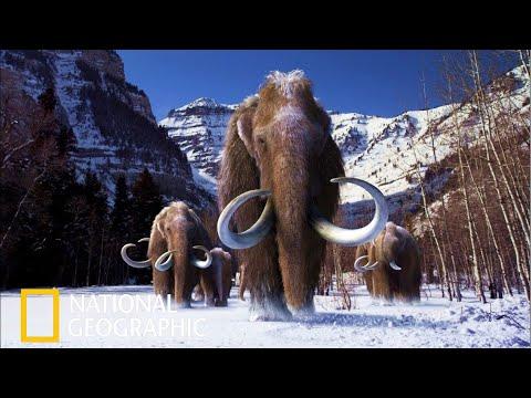 Мамонты National Geographic Документальный Фильм 2021 - Ruslar.Biz