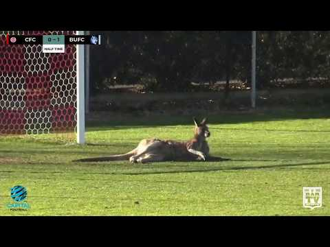 Real-Life 'Socceroo' Disrupts Canberra Match