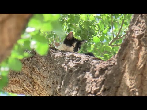 New Mexico woman pleads for someone to rescue cat stuck in tree