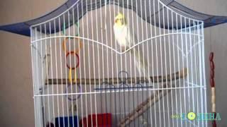 Година ТВ - Папуга про путіна