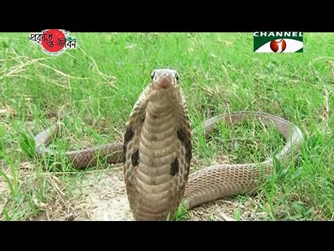 Nature and Life - Episode 235 (Endangered Snakes)