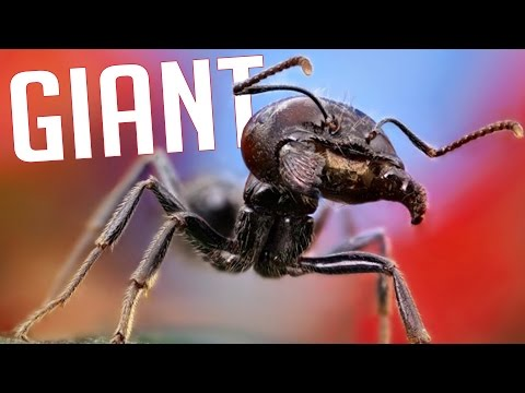 GiAnt - Experience the Life of an Ant! (Ant Simulator)