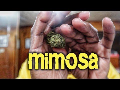 SmokerFam Mimosa Delta 8 Industrial Hemp