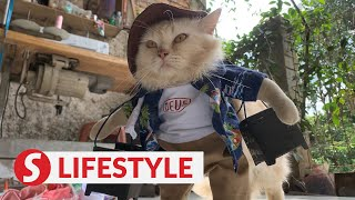 Indonesian tailor makes cosplay costumes for cats