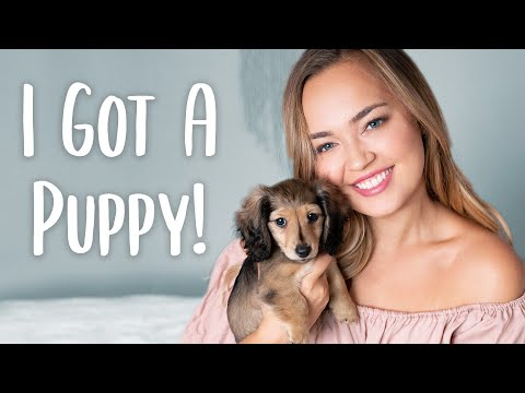 MY NEW PUPPY: Miniature Dachshund Puppy Haul