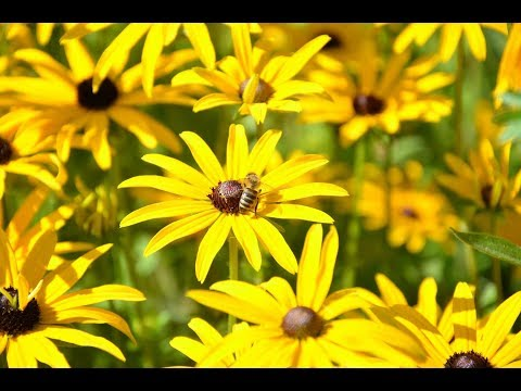 Flowers That Are Good For Bees | Southern Living
