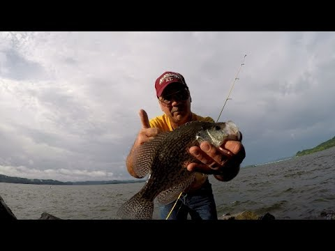 3 crappie fishing tips guaranteed to catch crappies fro for How to fish for crappie from the bank