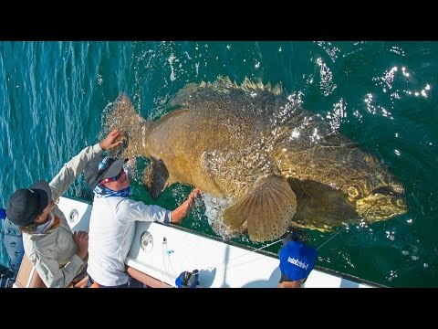 Josh gets Line Burn from Giant Grouper! - ft. Chew On This