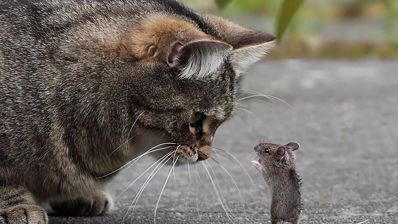 Злые кошки и мышки картинки