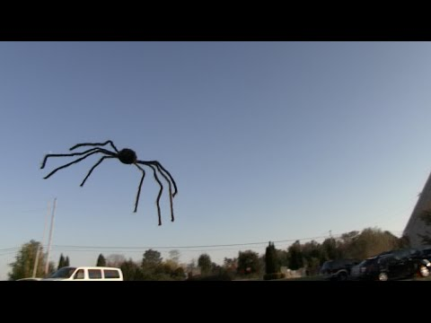 FLYING SPIDER PRANK! - Tom Mabe Halloween Pranks