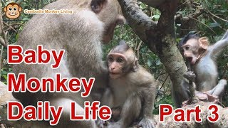 Baby Monkey Daily Life Part 3 - Cambodia Monkey Living 2019