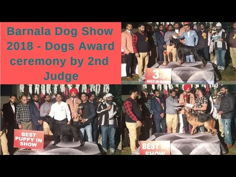 Barnala Dog Show 2018 - Wholesale puppy market and Owner's review
