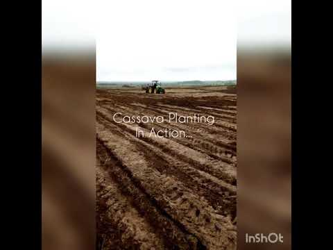 Cassava Planting In Action, Oyo State, Nigeria