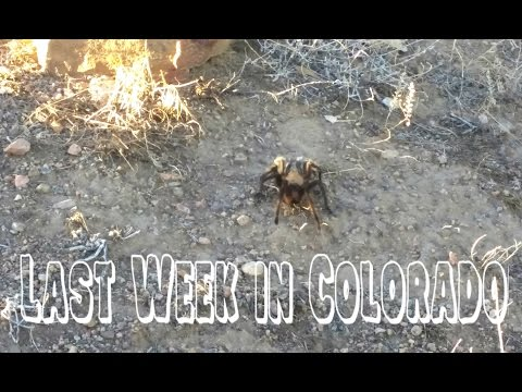 My Last Week in Colorado! | VLOG