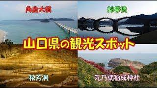 山口県の観光スポット 錦帯橋、秋芳洞、元乃隅稲成神社、角島大橋をまわります
