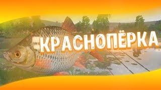 Російська Рибалка 4 | Краснопірка | р. Сура