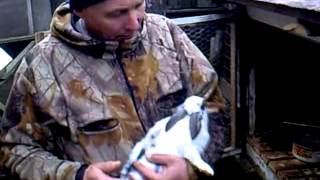 Ферма для кроликов Малышева(полный фильм)