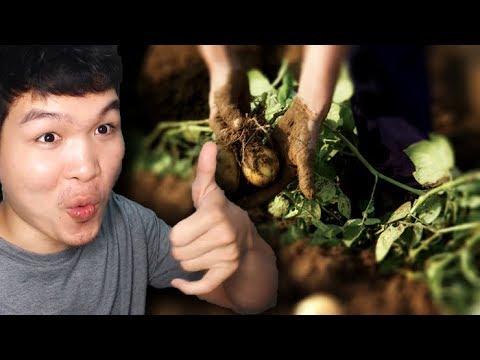 ធ្វេីចំការដំឡូង(Potato Farm) - Stranded Deep | Part 20