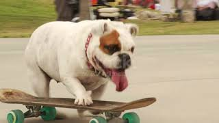 Best Funny Dogs  videos #1