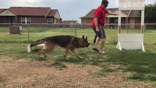 Animal Fails of the Week 4 June 2017   Animal Fails Compilation 2017