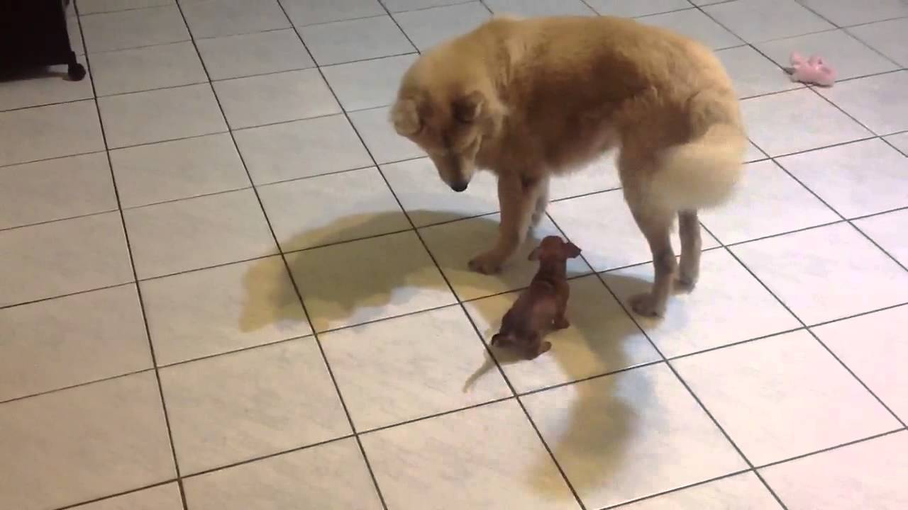 Killer Puppy Killing Dogs With Cuteness Youtube