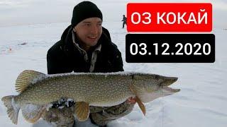 оз Кокай Коргальжино 03 12 2020г Первый лед Рыбалка в Заповеднике