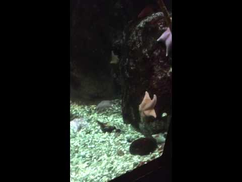 The Aquarium,Pittsburgh PA