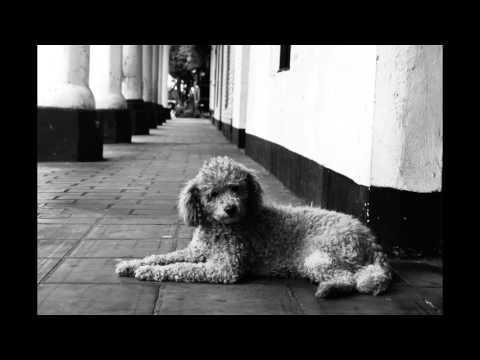 video streetphotography 1