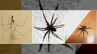 видео Как избавиться от насекомых