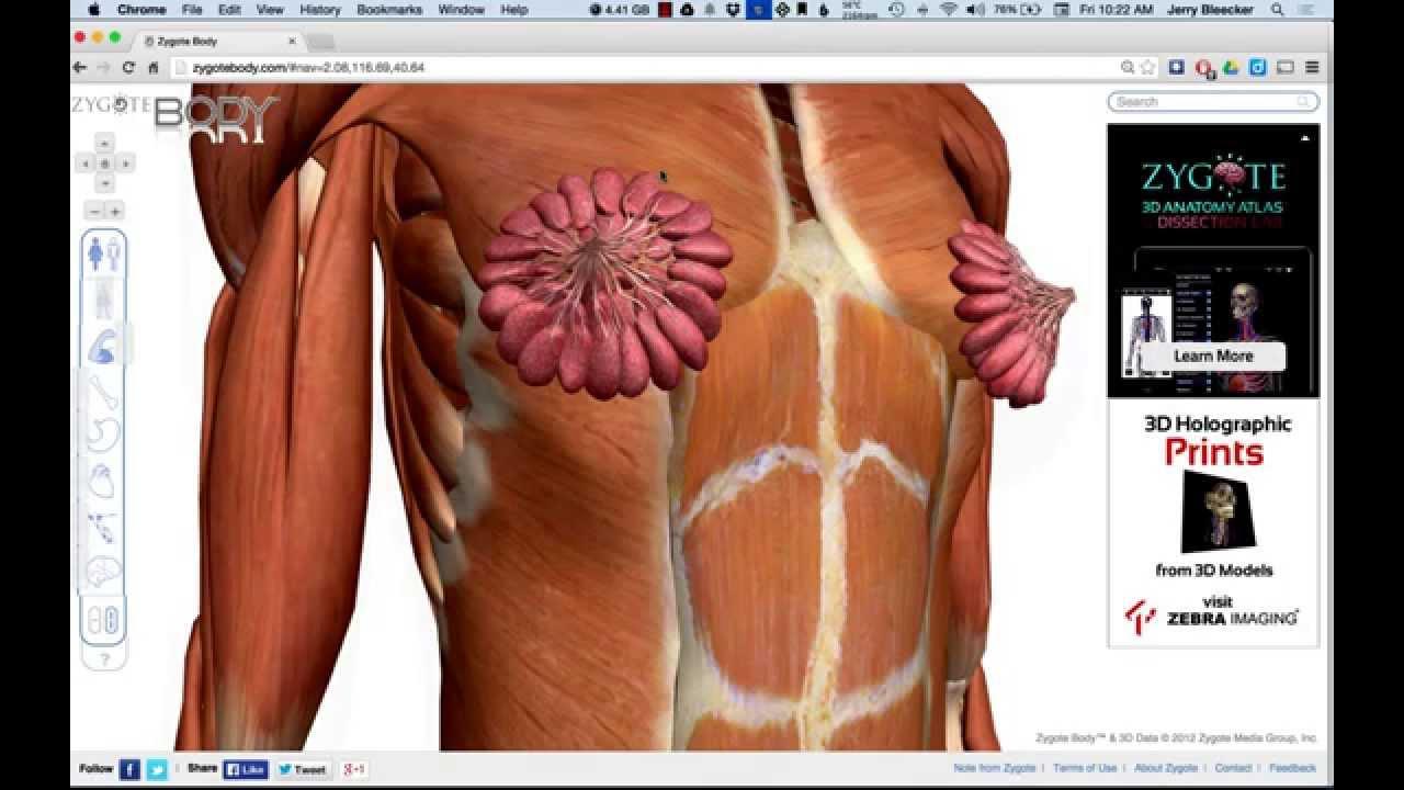 Lesson 23 - External Female Anatomy - YouTube