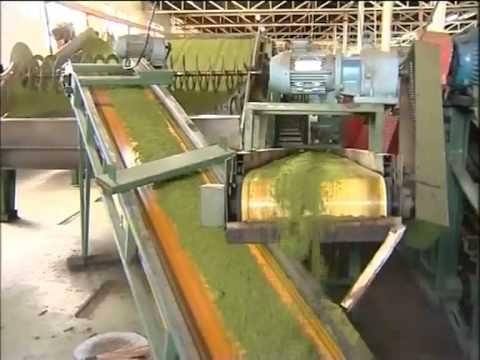 Focus On Tea Production In Kenya