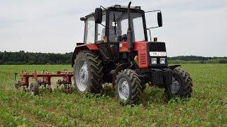 MTZ 820 Kukorica sorközművelés / Cultivating corn / *HD*