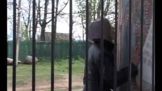 Ольга Кормухина - Я падаю в небо - фильм