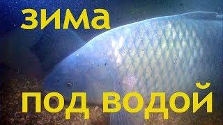 ЗИМА ПОД ВОДОЙ О чём молчат рыбы 71