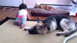 Baby And German Shepherd