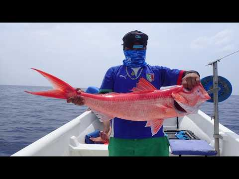 Deep Sea Fisheries And Research In Belize