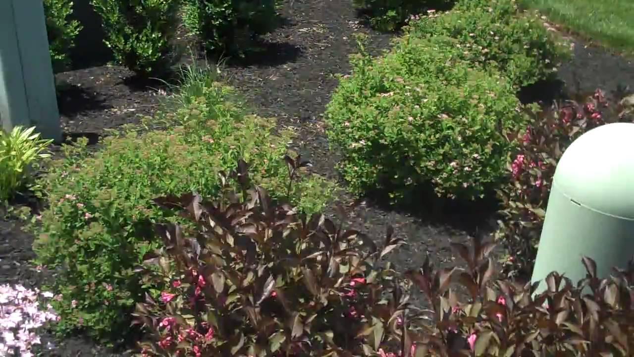 Flower beds shrubs bushes chris orser landscaping youtube for Best bushes for flower beds