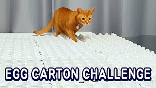 Cats vs Egg Carton Challenge | Can Cats Walk on it?