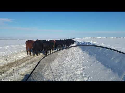 Snow machine farmin 2